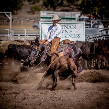 Springsure Cutting Show 2014
