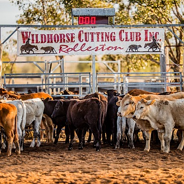 Wildhorse Cutting 2020
